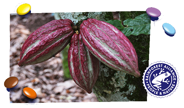 Sustainable_Cocoa_GER_631x372px.png