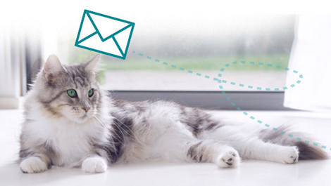 Purina ONE® Newsletter